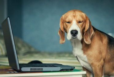 Honden Website Template