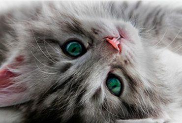 Katten Website Template